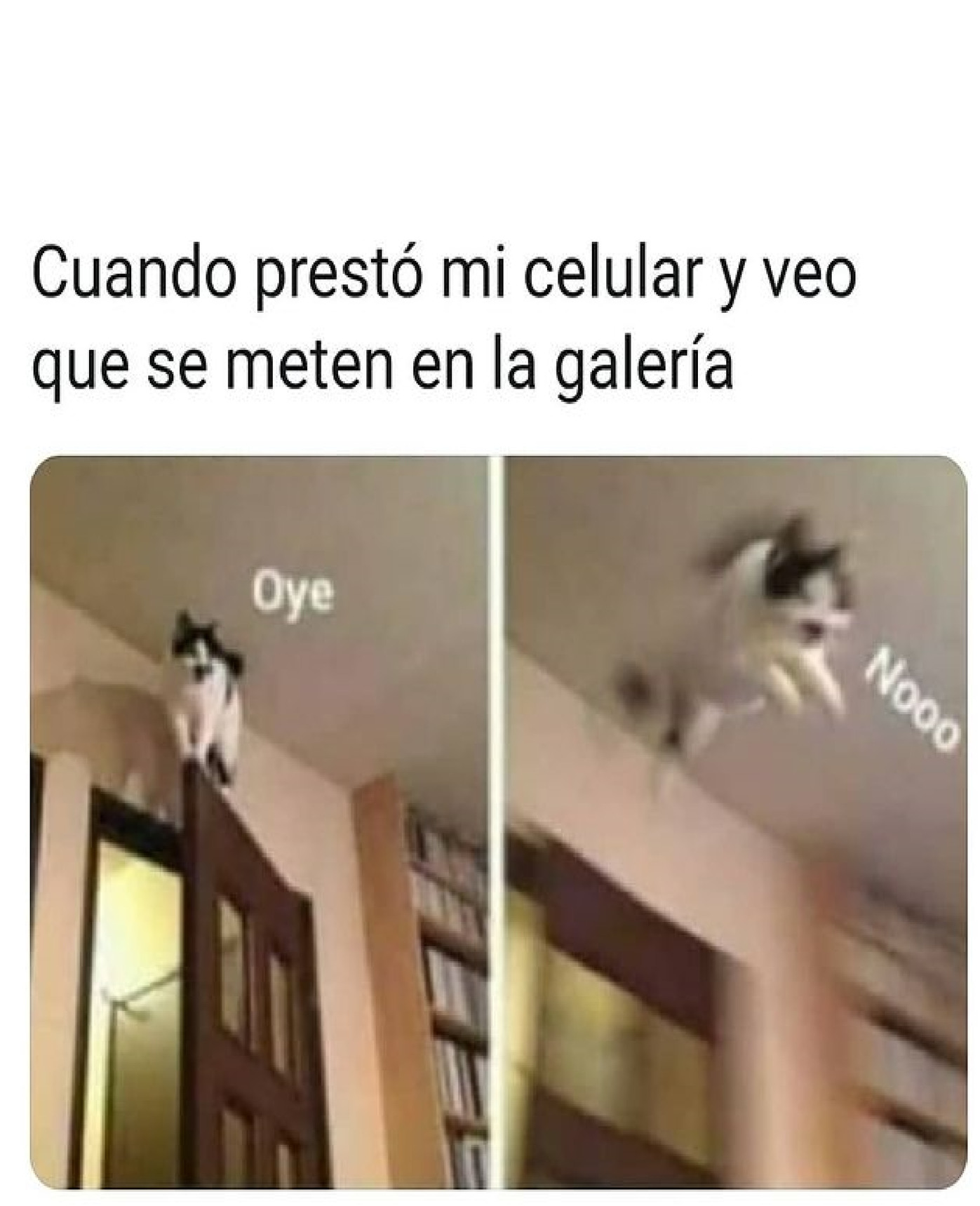 gatito - meme