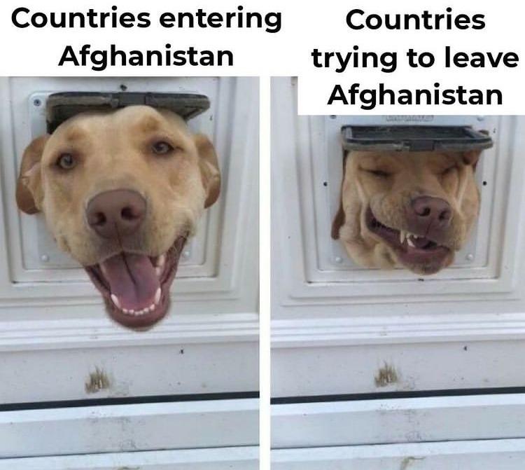 help me step dog I'm stuck - meme