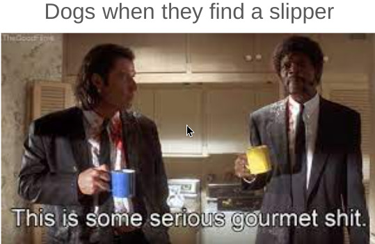doggo with the 1 course meal - meme