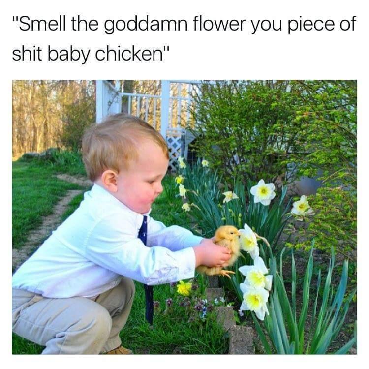 Smell the flower - meme