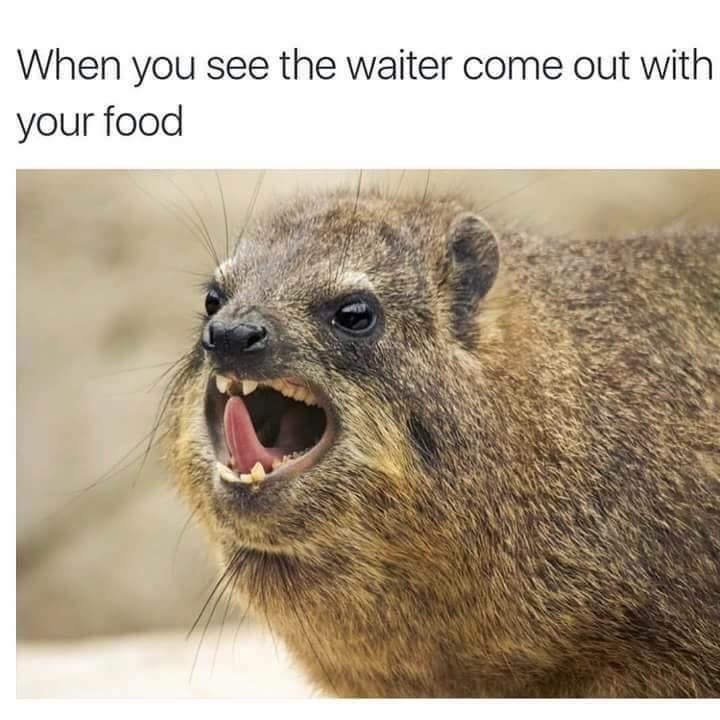Fooooooooood - meme
