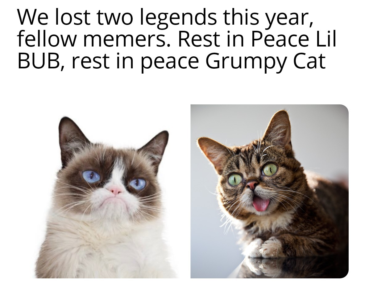 I can't believe they're both gone :( - meme