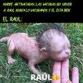 RAUL TA JOYA