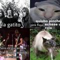 ola gatito