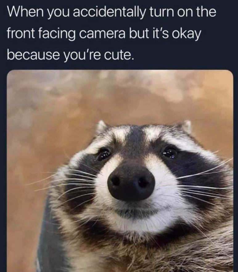 Cute 'coon - meme