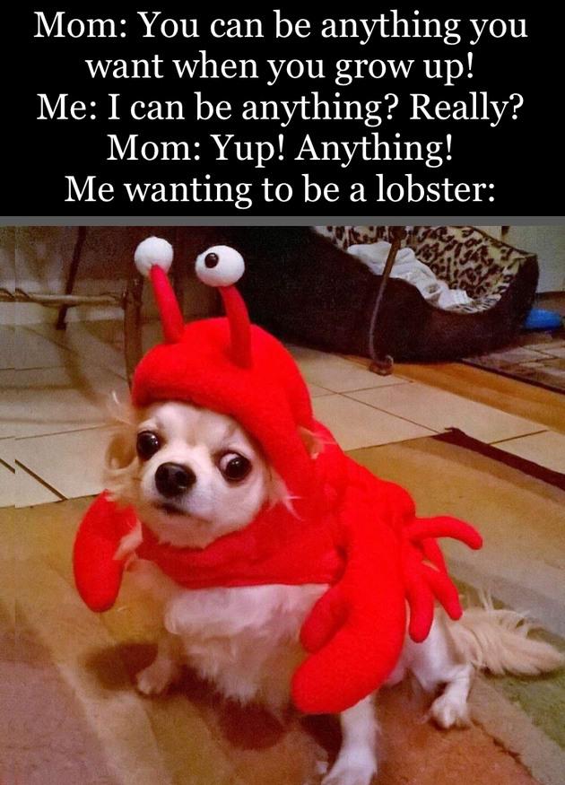 Lobster time - meme