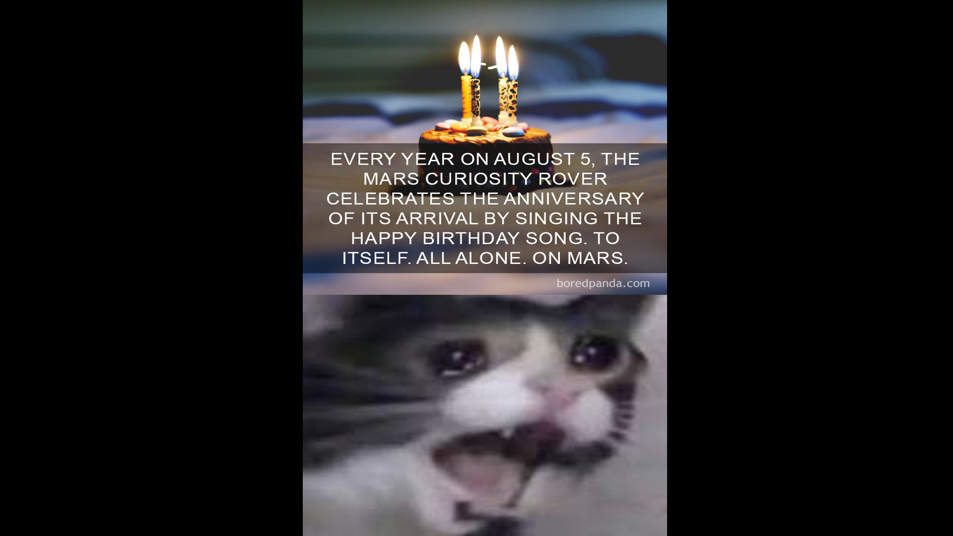 sad cat - meme