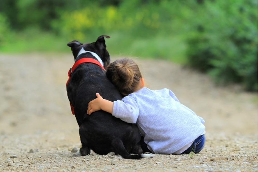 Never a better place of comfort than a good dog. - meme