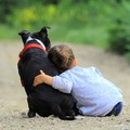 Never a better place of comfort than a good dog.