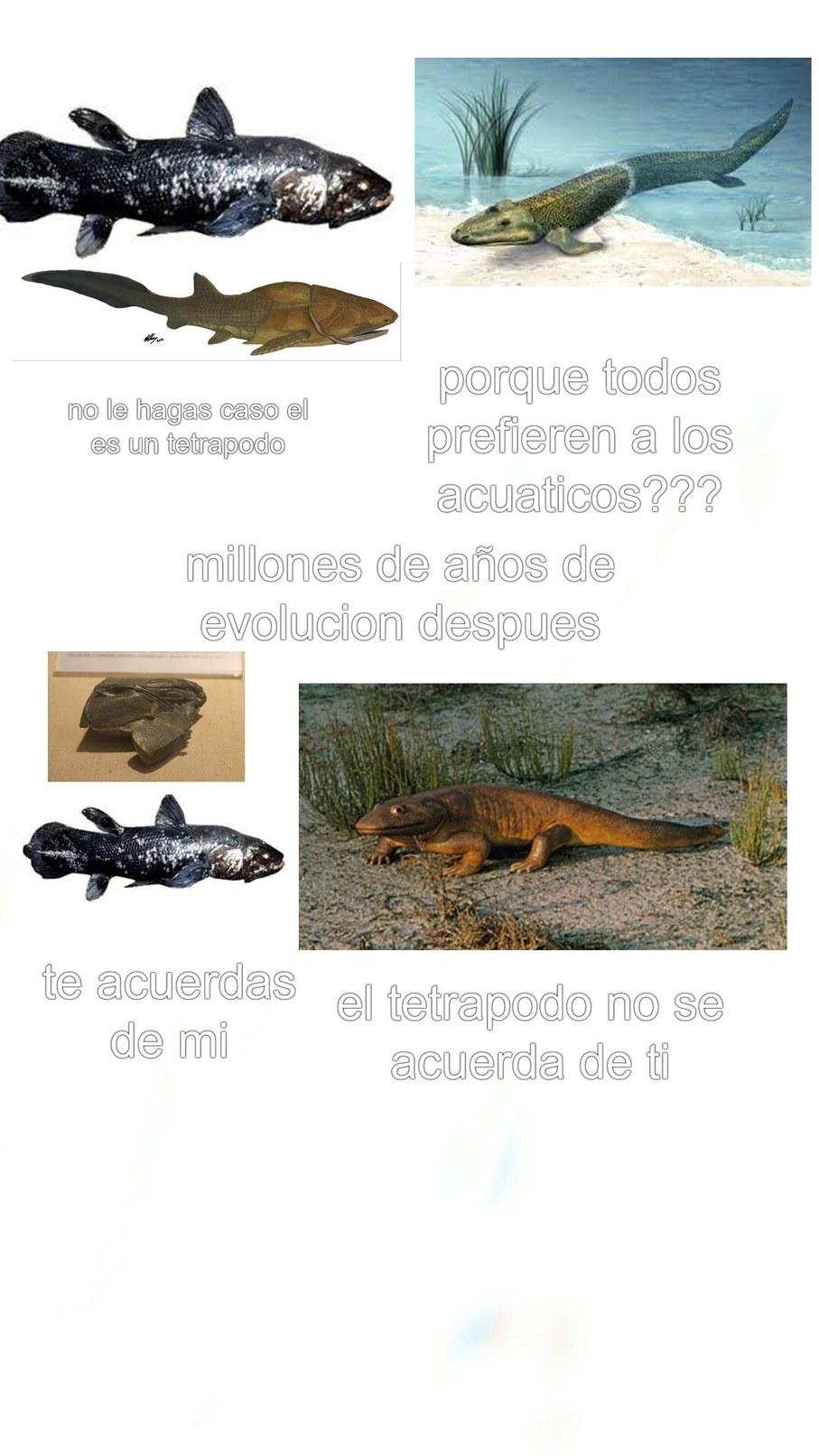 momos biologia - meme