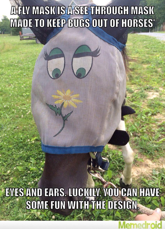 Equestrians Unite! - meme