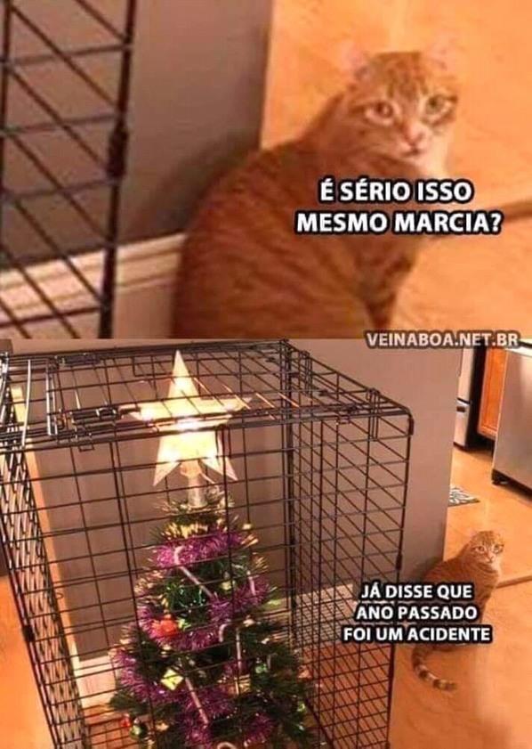 Se vc tem um gato é melhor fazer isso - meme