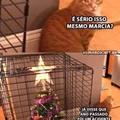 Se vc tem um gato é melhor fazer isso