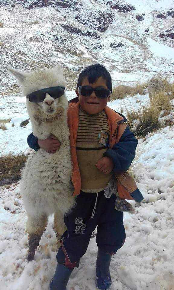 Niño peruano y llama facha - meme