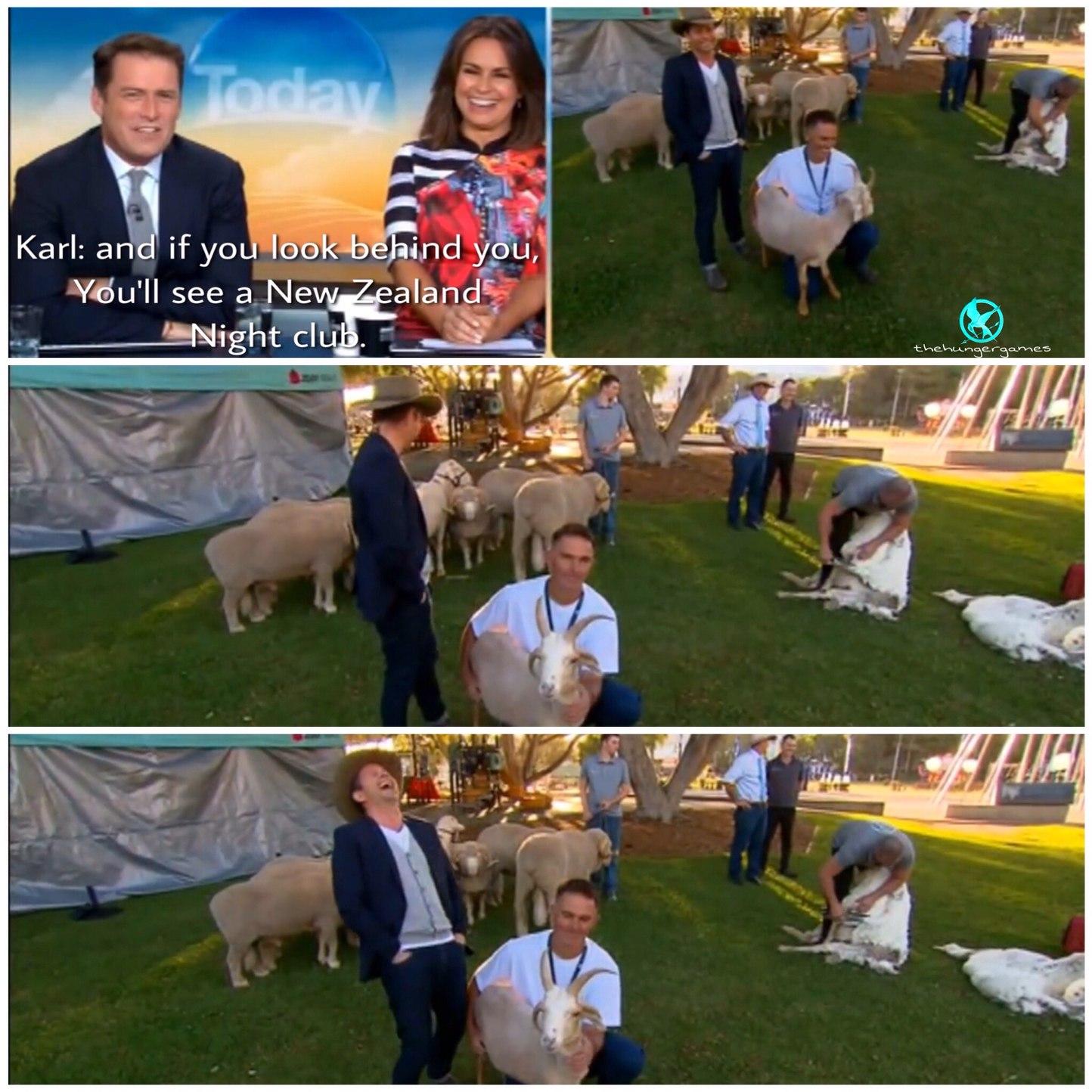 bloody sheep shaggers - meme