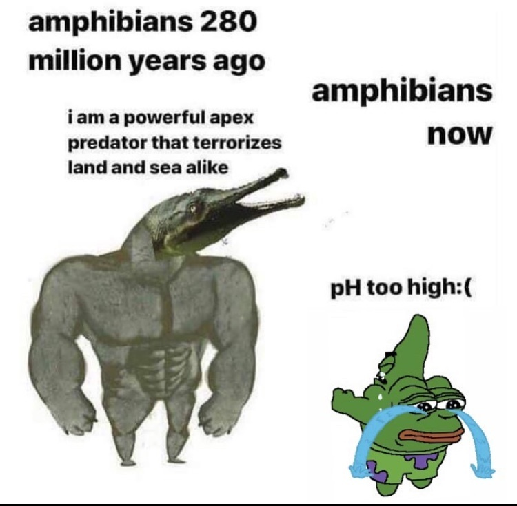 ph too high - meme