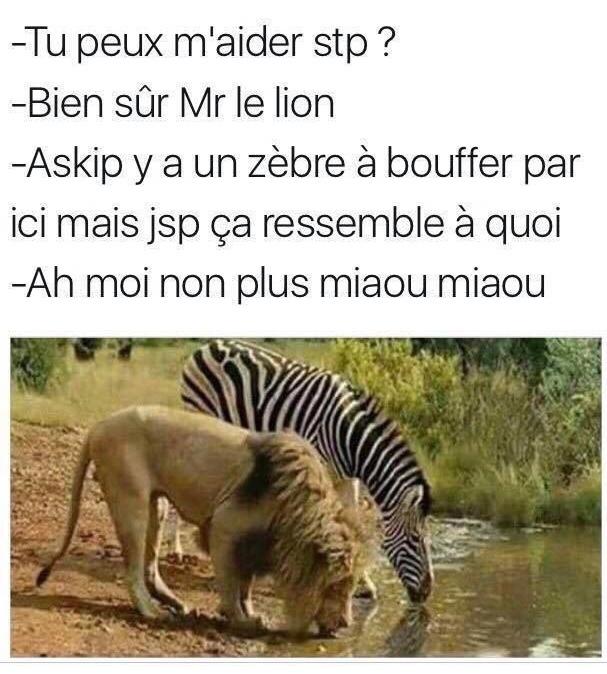 Miaou. - meme