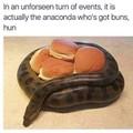 My Anaconda do