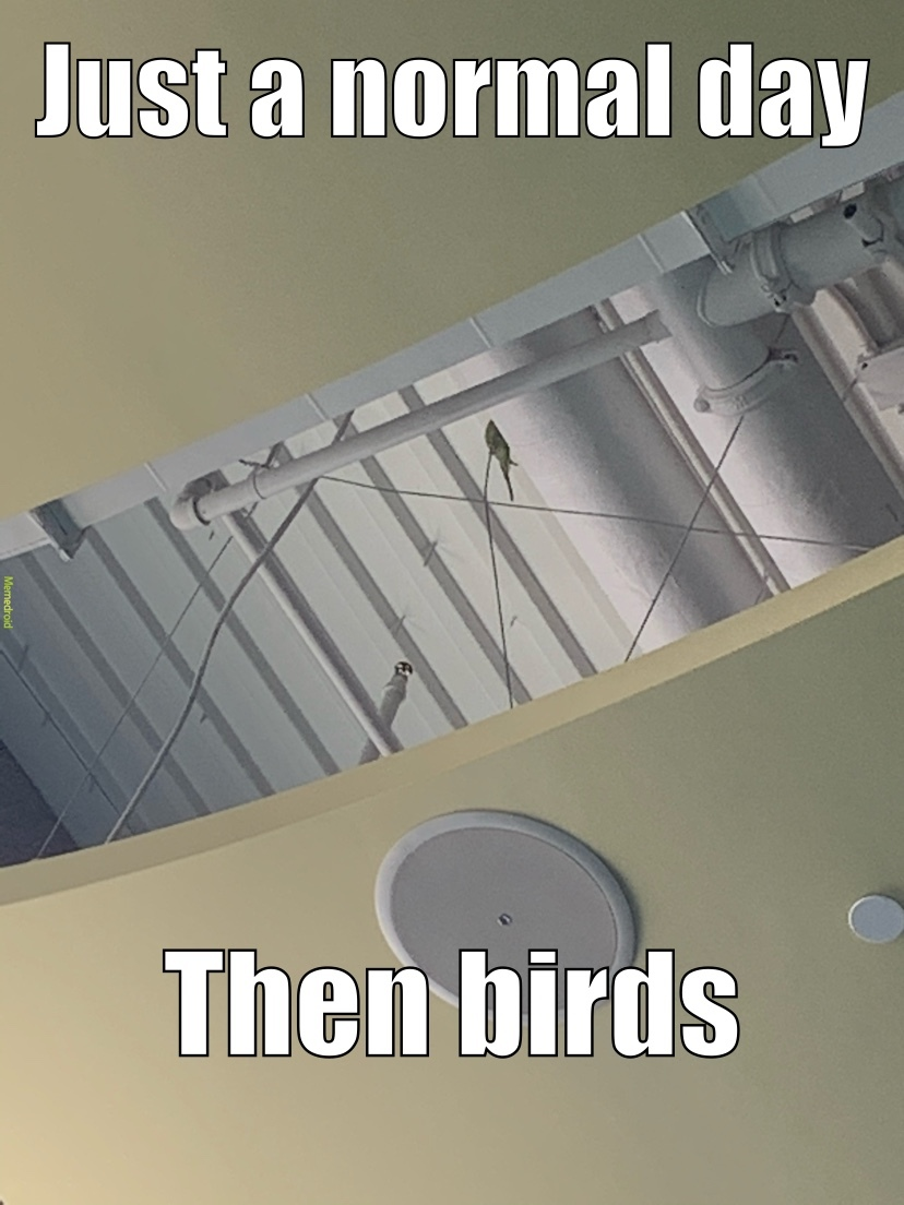 all the sudden I here tweeting and boom!! bird - meme