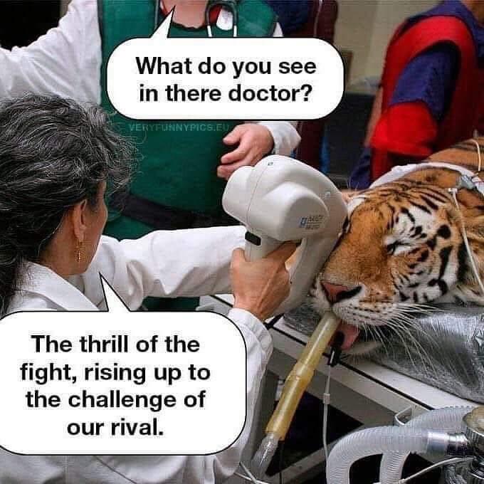 Tiger lol - meme