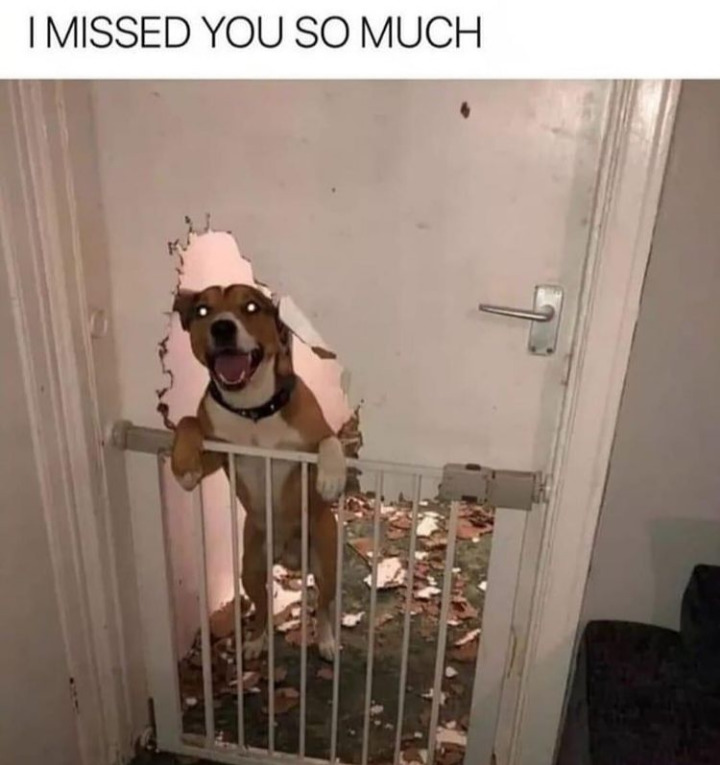 Missed you, too, buddy - meme