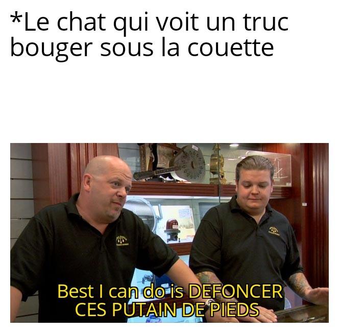 Chat bite - meme