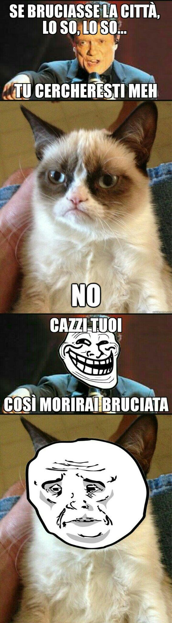 Poor cat. Nomino Signore dei 2 peni (batmon), Maty (il mio amoro❤), Polistirolo999, Perezzo e Dogeon. Preise the sun \[T]/ - meme