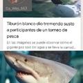 Tiburon a la vista
