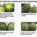 watermelon guide