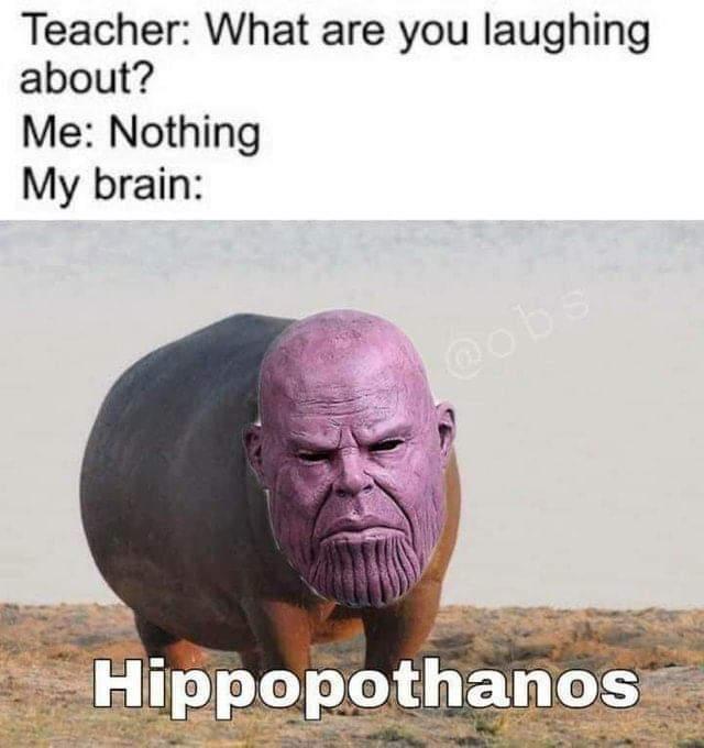 Ah a wild hippopothanos. So majestic - meme