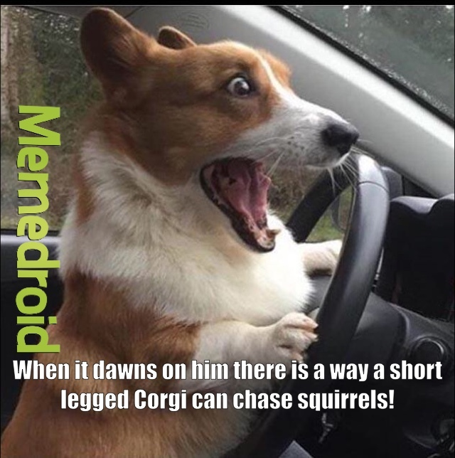 Corgies can dream can't they?!? - meme