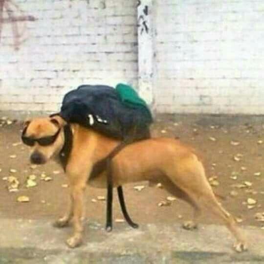 Perro con mochila - meme