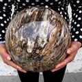 Полированная сфера окаменевшей древесины