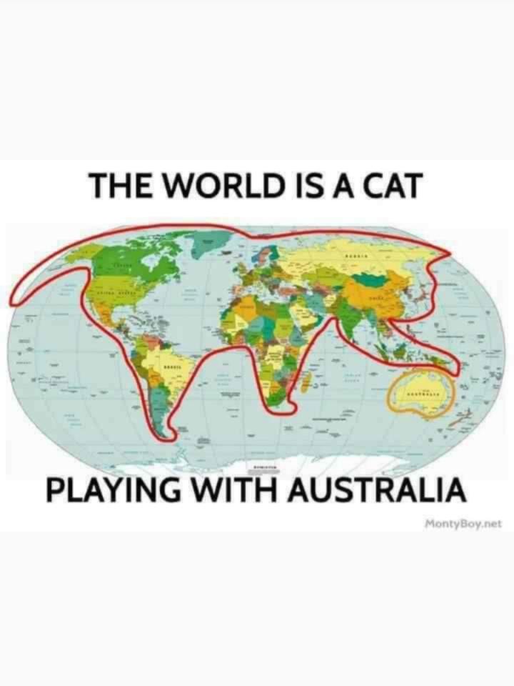 World of War Cats - meme