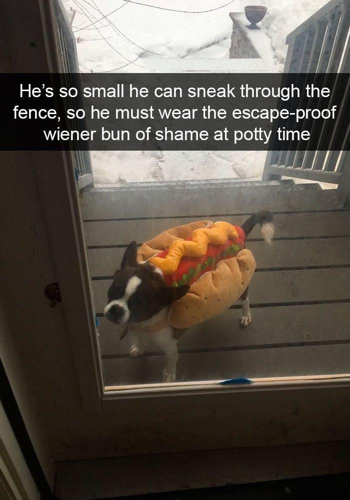 wiener bun of shame - dun dun DUN (not mine) - meme