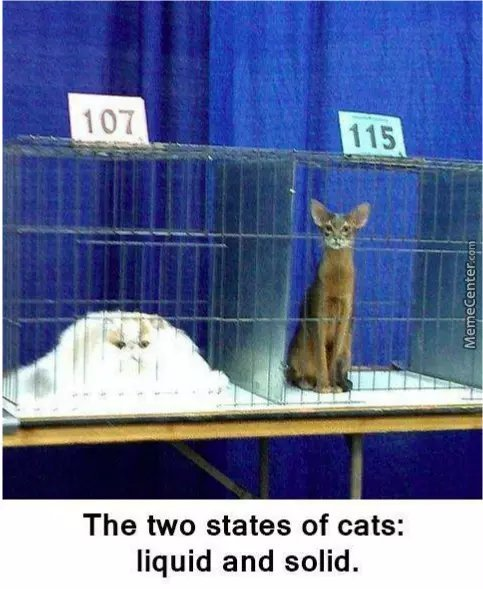 There are two types of cats - meme