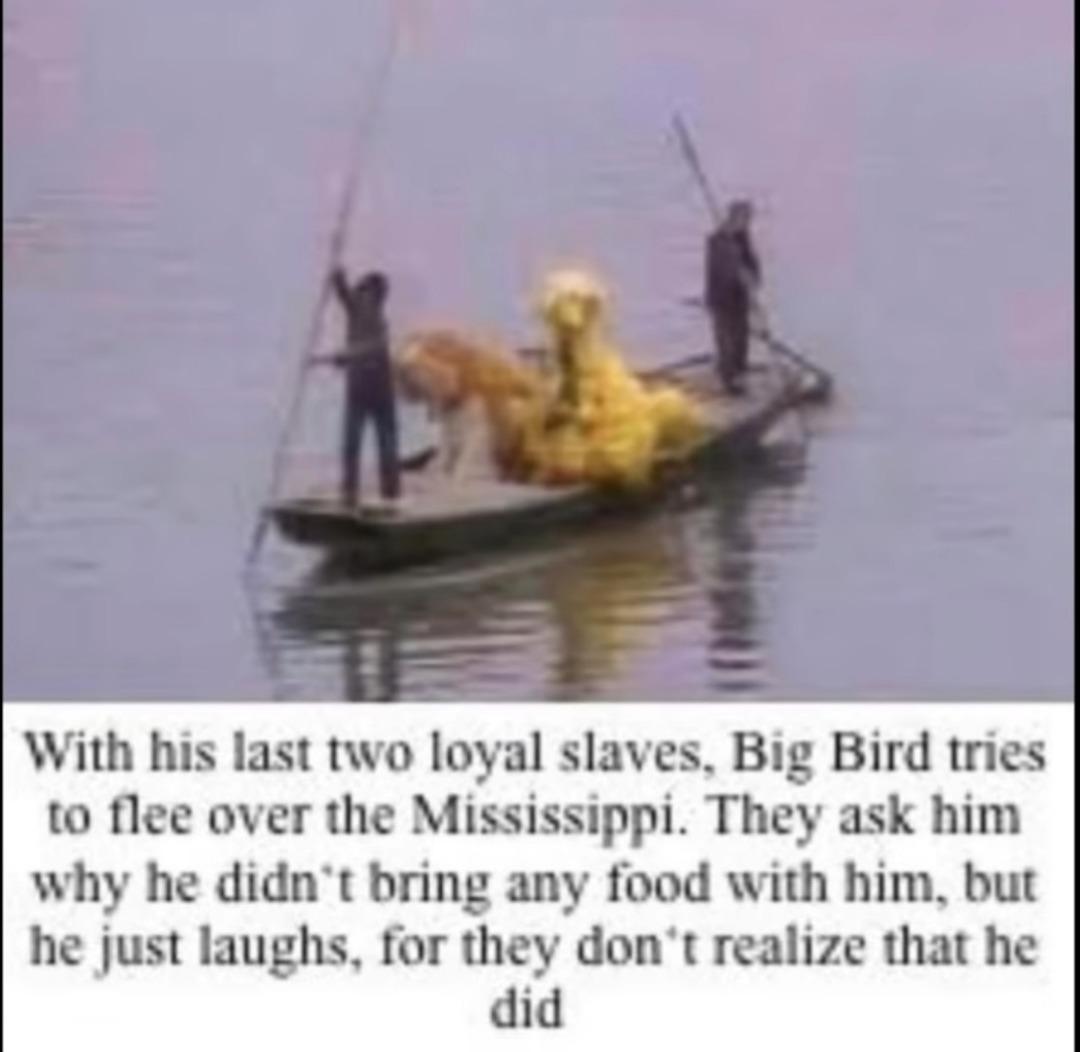 Bug bird - meme