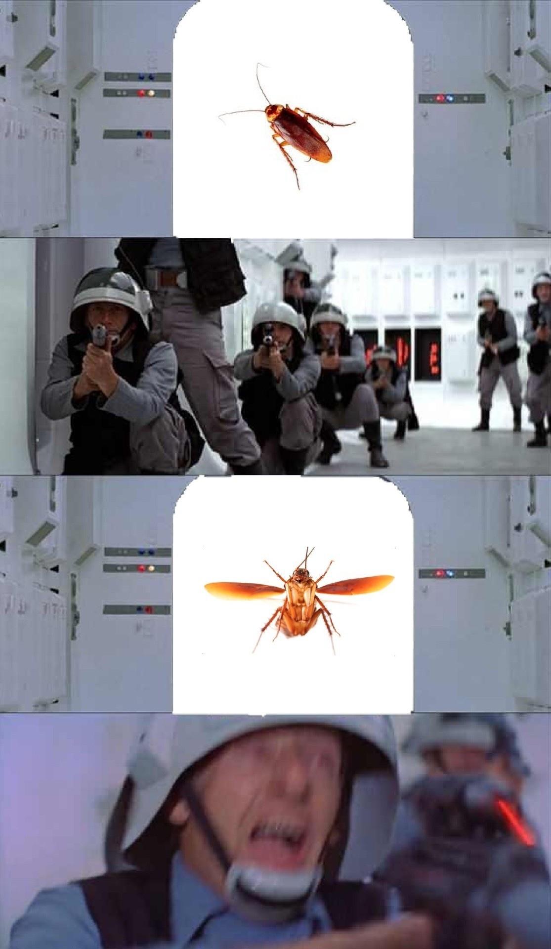 palmetto bugs - meme