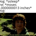Sensitive dog