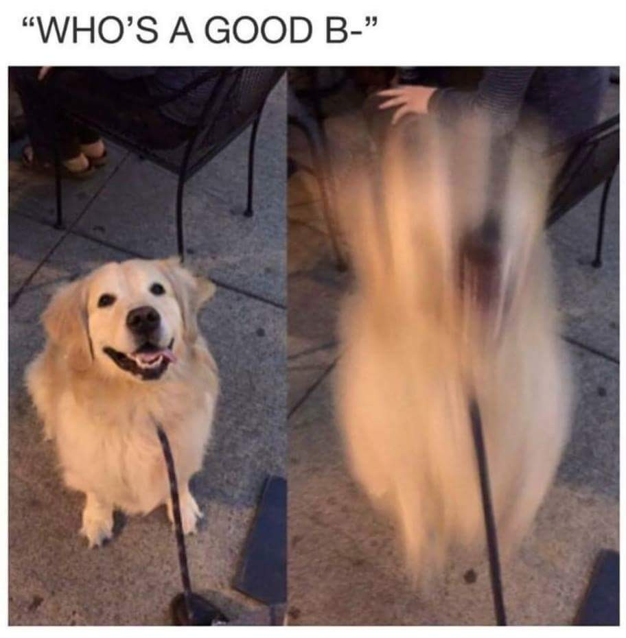 Good boy release - meme
