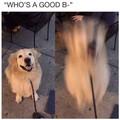 Good boy release