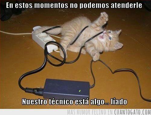 maldito gato me dejo sin wifi - meme