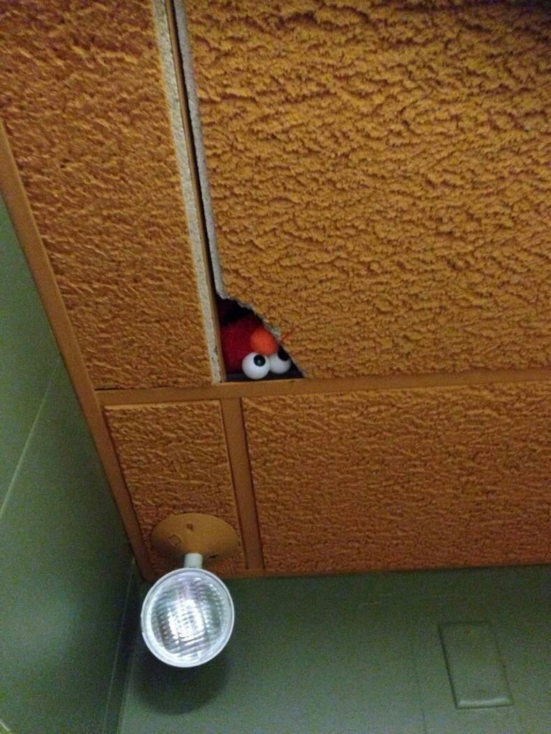 Elmo watches you pee - meme