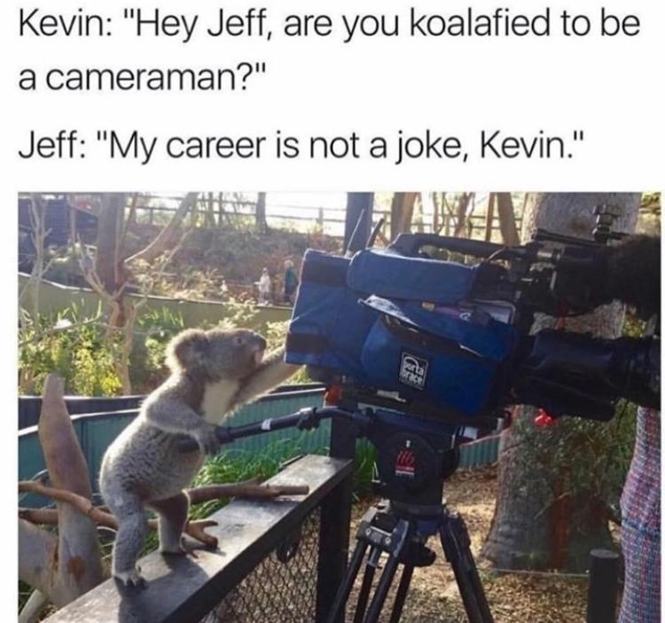 koala - meme