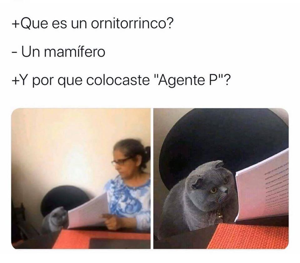 Perry el terrancolito - meme