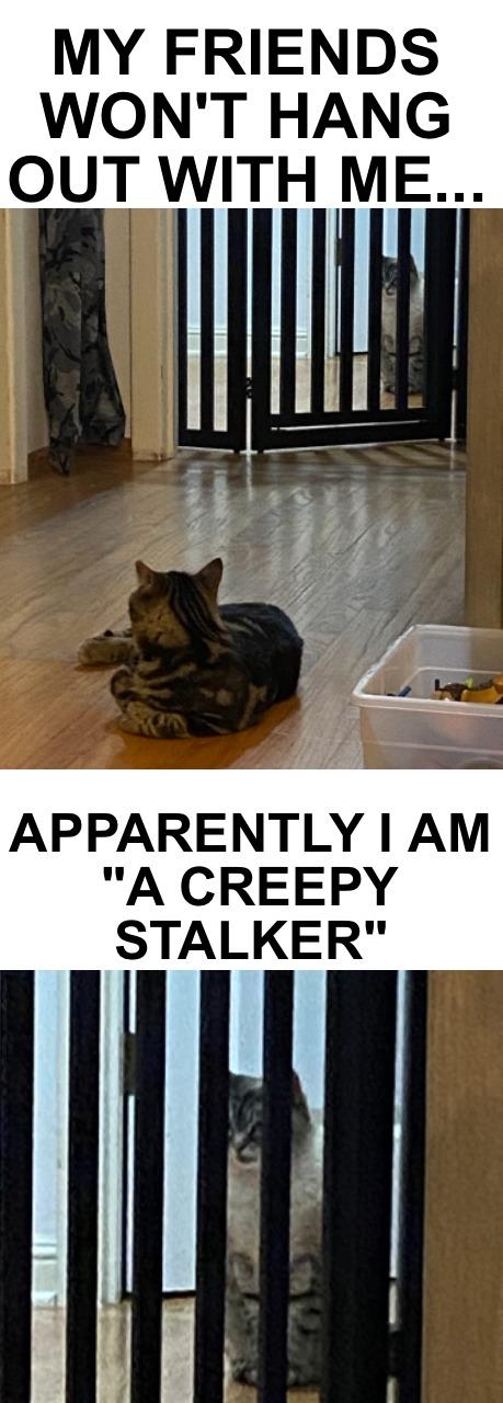 Gracie stalking Tigger - meme