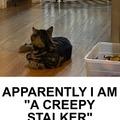 Gracie stalking Tigger