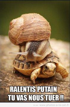 RALENTI !!! - meme