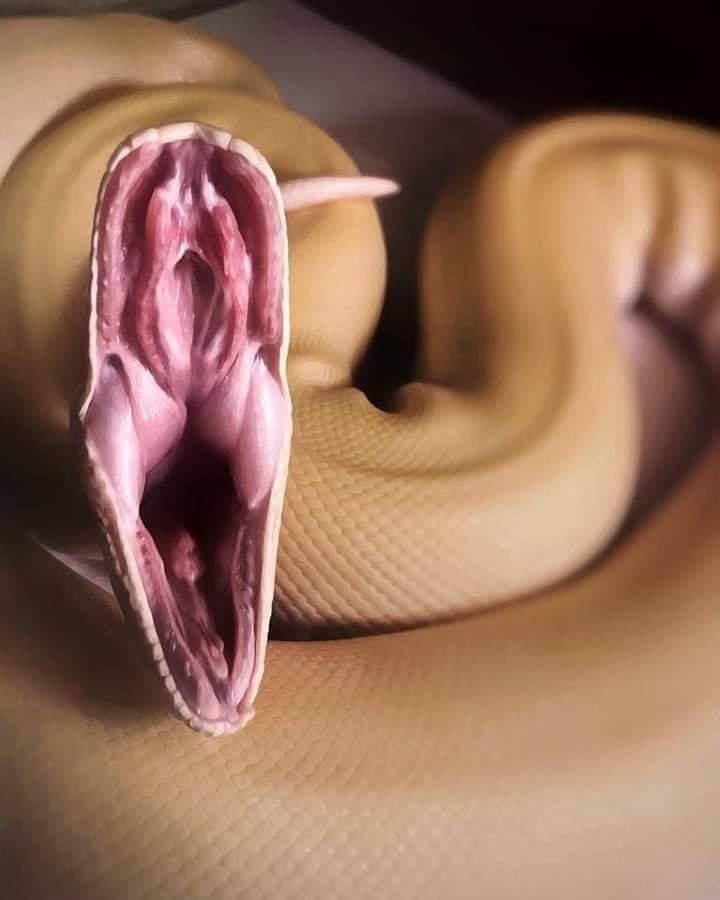 Sacré serpent - meme