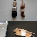 Une vraie souris
